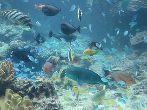 美ら海水族館03