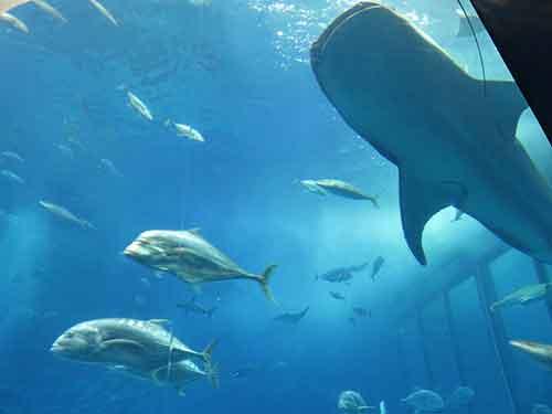 美ら海水族館08