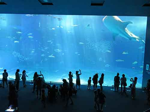 美ら海水族館04