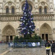 ノートルダム大聖堂 クリスマスツリー