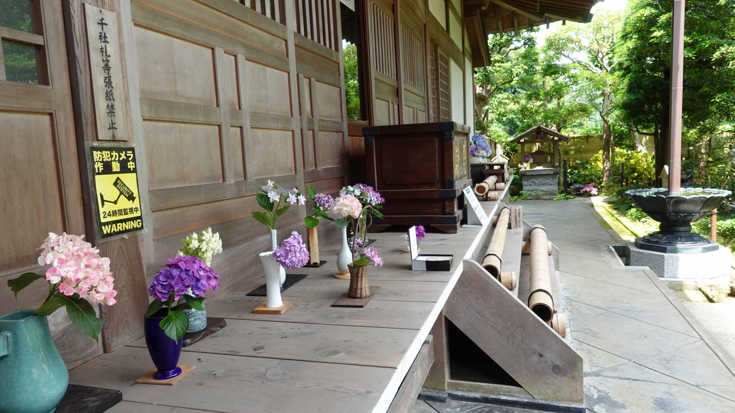 成就院 紫陽花 方丈