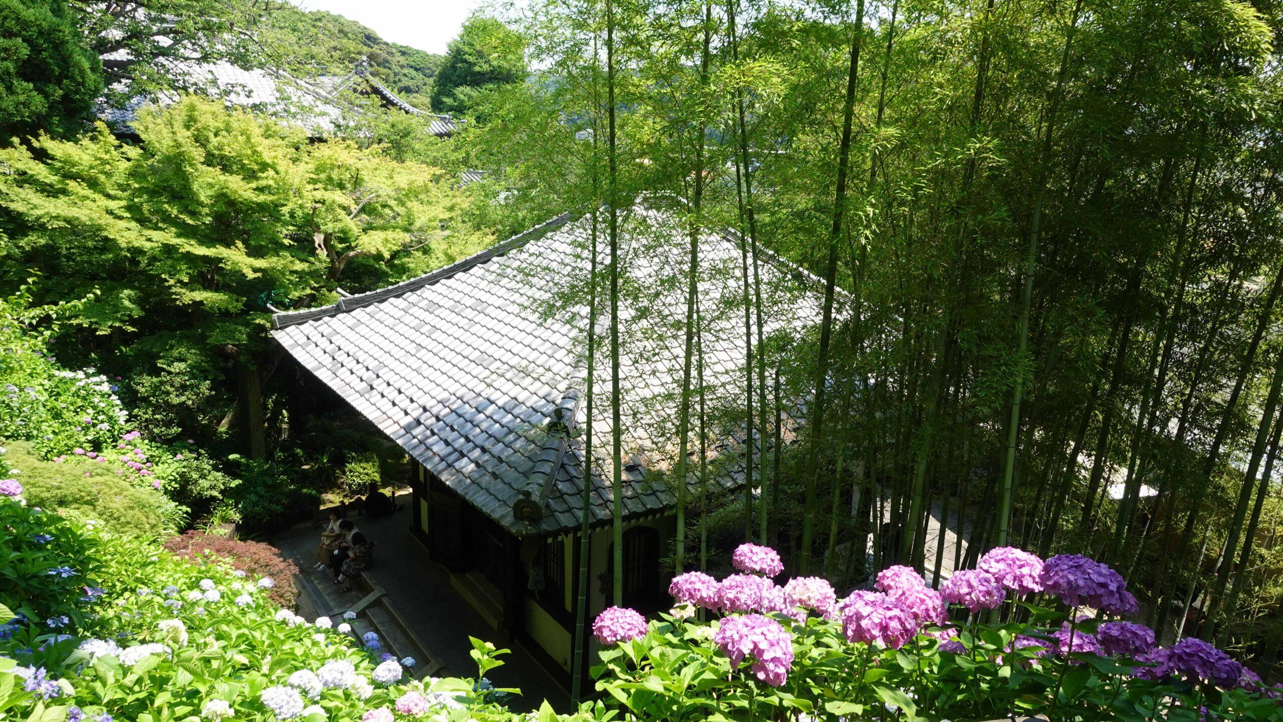 紫陽花 竹林