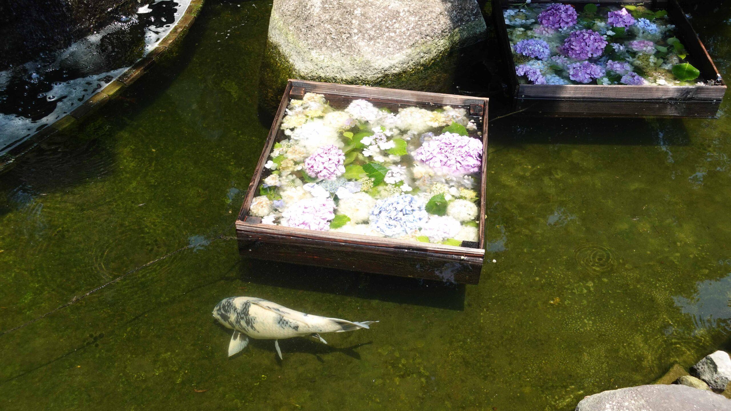 長谷寺 卍池