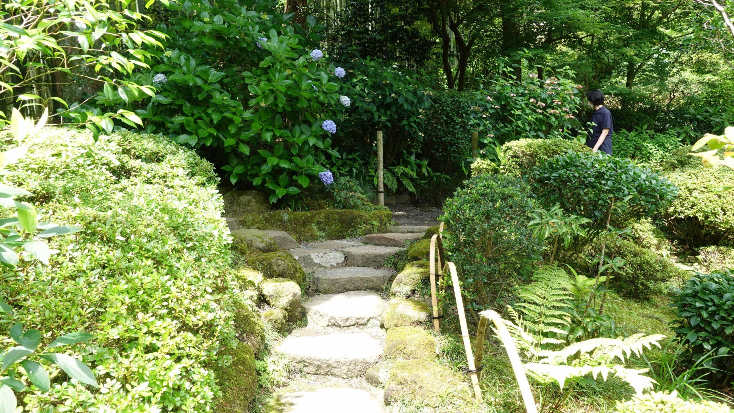 報国寺 本堂 庭園03